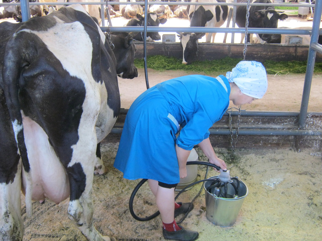 Конкурс операторов машинного доения коров вопросы и ответы