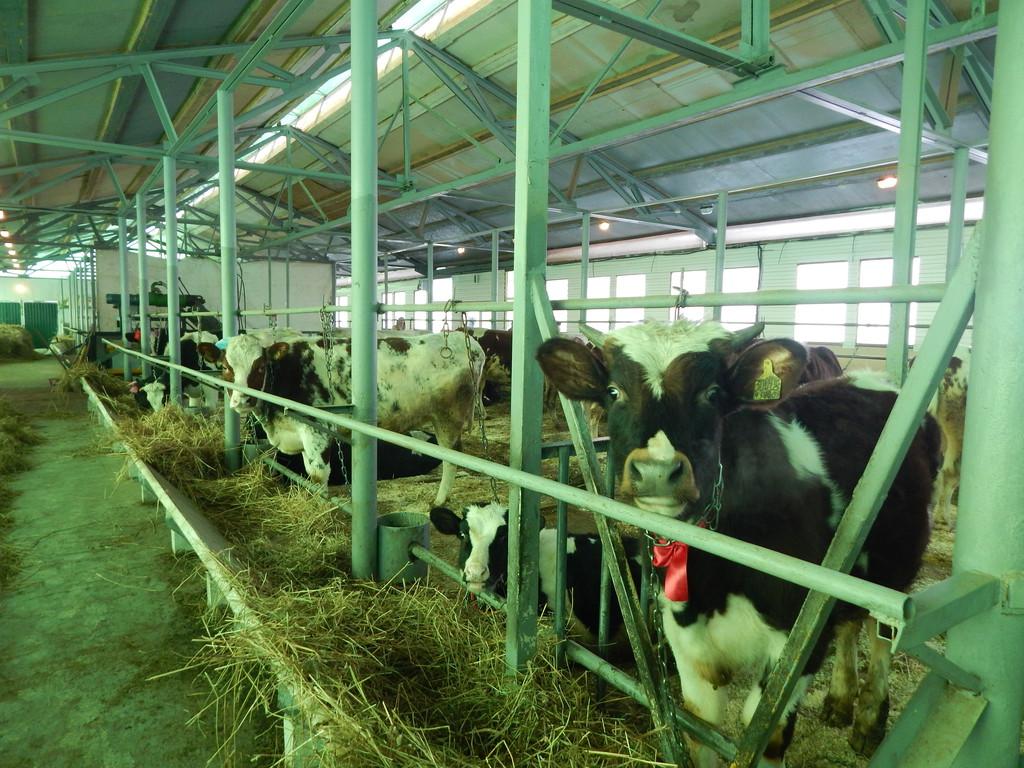 Как сделать свое фермерское хозяйство