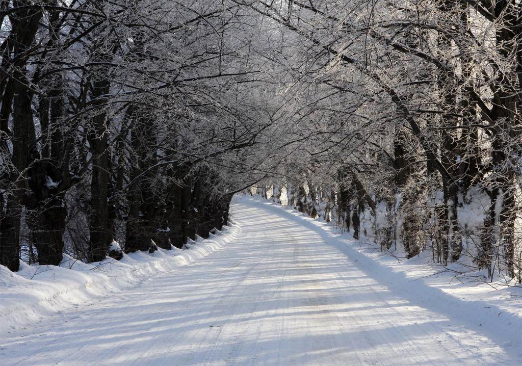 Природа Лужского района